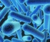 бактерия Легионелла